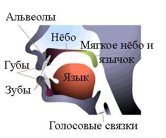 organs-of-speech1